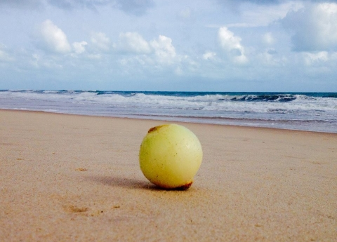 onion on a beach